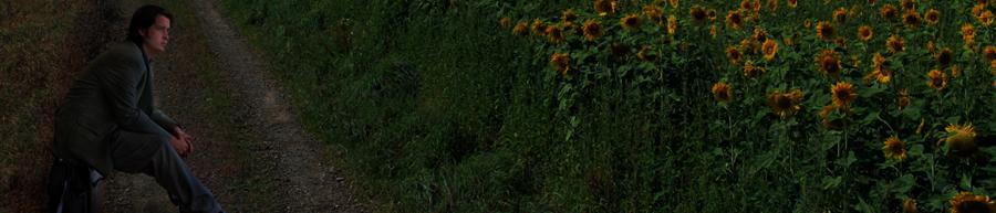 Грязно-золотая поляна
