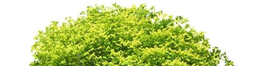 Быстрая обработка дерева