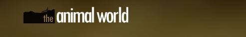 theanimalworld.ru
