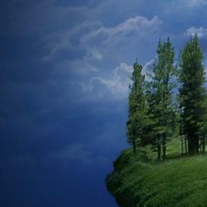 Растут ли елки на обрывах?