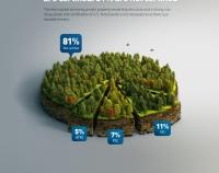 Лесная инфографика