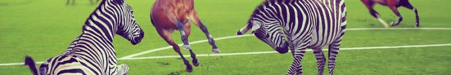 кони против зебр